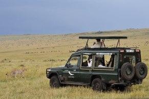 ghepardo-safari-tanzania
