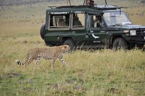 jeep-cheetah-serengeti