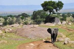 Elephant, Serengeti National Park