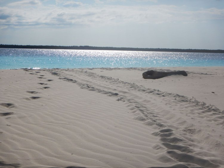 Mnemba Island, turtle's traces