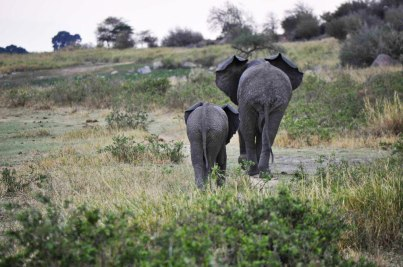 elephants-lake-manyara