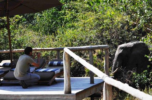 Lake Manyara Tree Lodge, Elephant next to the swimming pool