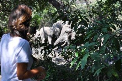 Lake Manyara Tree Lodge, Elephants next to the swimming pool