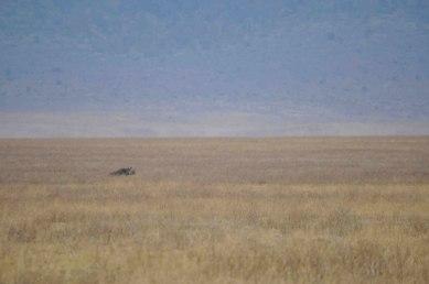 Ngorongoro Crater, Black Rhino