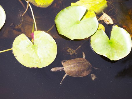 turtle-jardin-majorelle