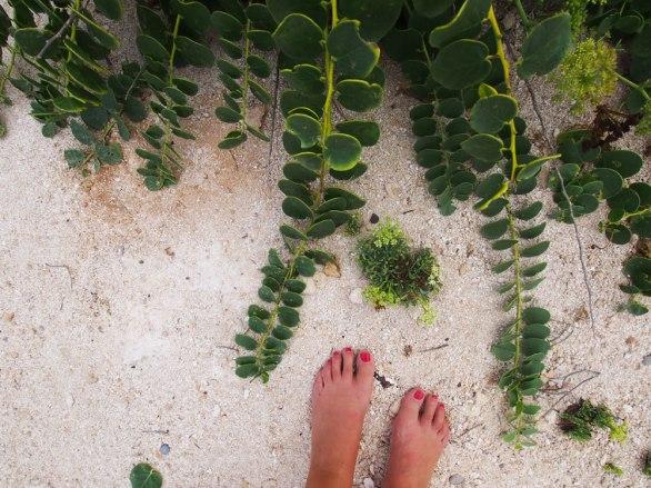 Calcarenita, sabbia bianca, a Favignana